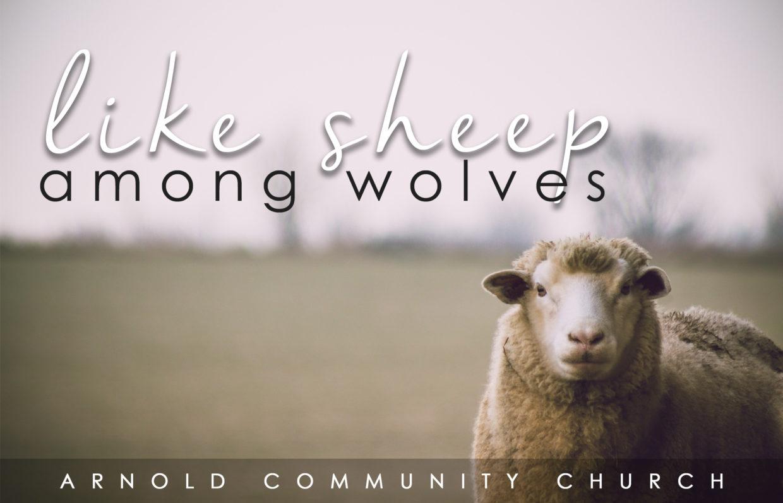 DEVO: Like Sheep Among Wolves